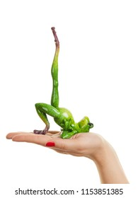 Funny fat frog fitness, balance and workout concept on a female hand.