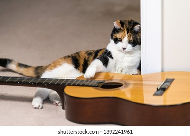 Funny female curious calico cat lying on carpet floor looking at playing with musical instrument guitar in home room studio touching strings with one paw