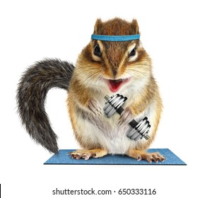 Funny fitness, animal chipmunk lifting dumbbell on white