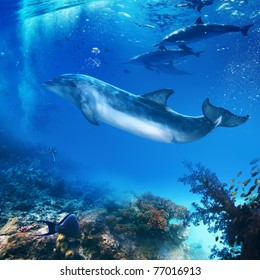 funny flipper posing underwater in front of dolphins family