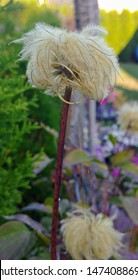 Funny Flower Head on Stalk