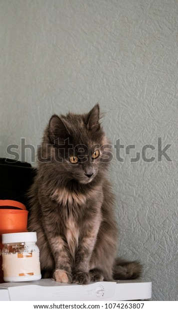 Funny Fluffy Cat On The Top