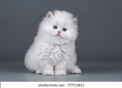 Fluffy White Cat High Res Stock Images Shutterstock