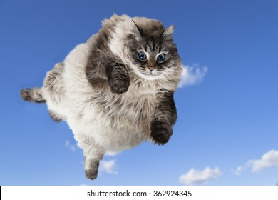 funny flying cat