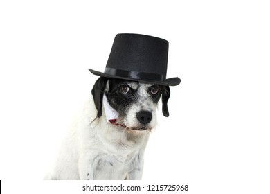 FUNNY FOG WEARING BLACK TOP HAT SN BOWTIE. ISOLATED AGAINST WHITE BACKGROUND.COPY SPACE