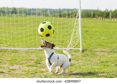 Funny football player dog juggling ball on pitch