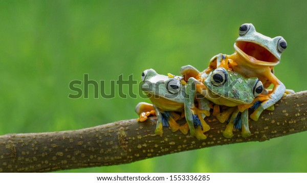 Funny forest three green frog in one family survive in the forest on the branch