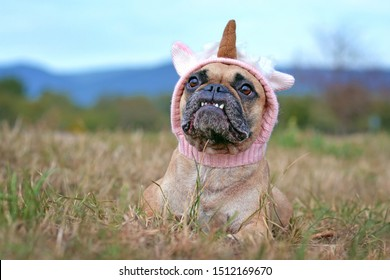 Funny French Bulldog dog with cute overbite lying down wearing a knitted unicorn hat Halloween costume