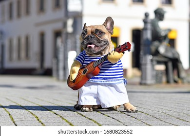 Funny French Bulldog dog dressed up as street perfomer musician wearing a costume with striped shirt and fake arms holding a toy guitar standing in city on sunny day