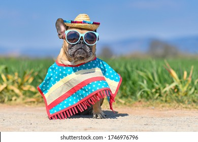 Funny French Bulldog dog dressed up with sunglasses, a colorful straw hat and poncho gown in front of blurry meadow in summer