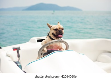 Funny French Bulldog dog is sitting behind the wheel of a speedboat, put his paws on the steering wheel against the sea, the carefree sunny summer day. lighting effects