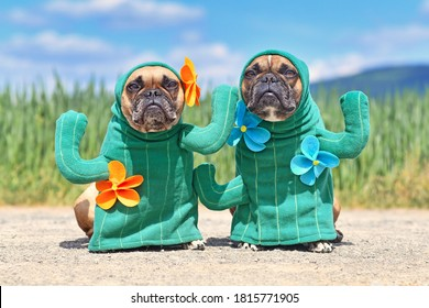 Funny French Bulldog dogs dressed up with funny cactus plant Halloween dog costumes with fake arms and flowers