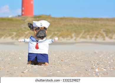 Funny French Bulldog dressed up with a cute sailor dog costume on beach