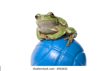 Funny frog on a blue ball