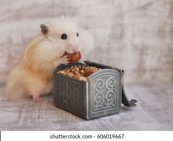 Funny furry hamster has large cheek. Hamster eats food.