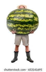 Funny gardener carrying a large watermelon. A farmer hold big water melon isolated on white background. Successful vegetable fruits grower. Large harvest of genetically modified foods.