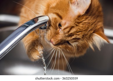 Funny Ginger Cat drinking water from kitchen tap