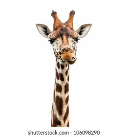 Funny giraffe's face isolated