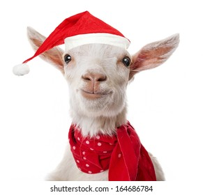 funny goat with a red santa cap