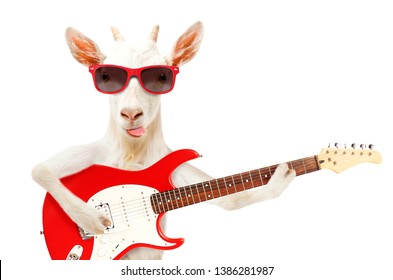 Funny goat showing tongue in sunglasses with electric guitar isolated on white background