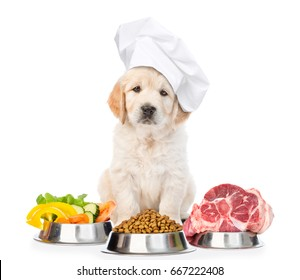 Funny golden retriever puppy in chef's hat with food for pets. isolated on white background.