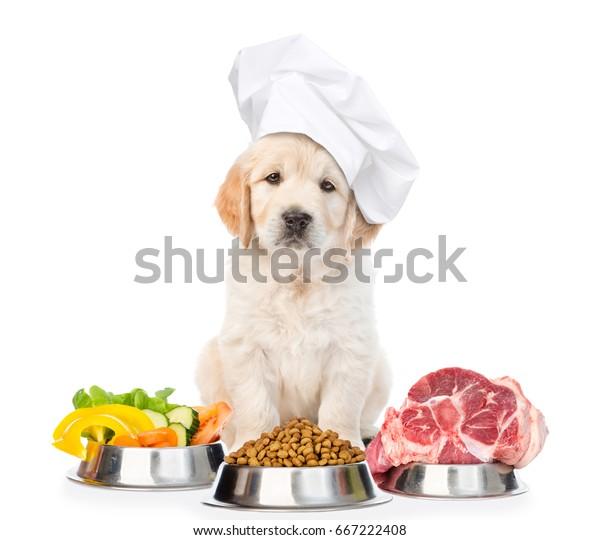 Hübscher, goldener Retrip-Welpe im Hut des Küchenchefs mit Essen für Haustiere.  einzeln auf weißem Hintergrund.
