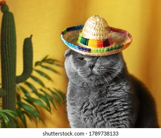 Funny gray cat in a Mexican sambrerro hat on his head. The cat's muzzle is unhappy. In the background yellow background green cacti. Funny pets. Scottish Fold cat. Pet dressing. Traveling with a pet