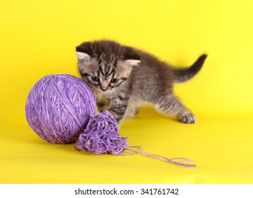 Funny gray kitten and ball of thread isolated on yellow