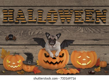 funny halloween pug dog and pumpkin lanterns on wooden background with letters Halloween