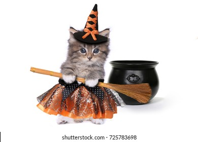 Funny Halloween Witch Themed Kitten
