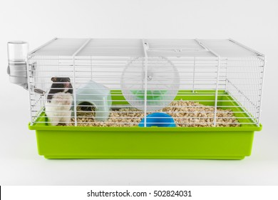 Funny hamster looking out of its cage on white