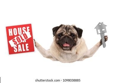 funny happy pug puppy dog holding up house key and sign with sold, isolated on white background