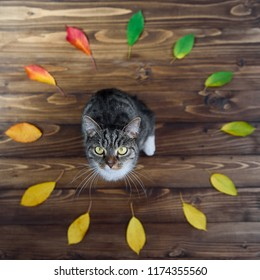 Funny home kitty sitting on a wooden background in the middle of the circle of autumn leaves. Lovely pets.