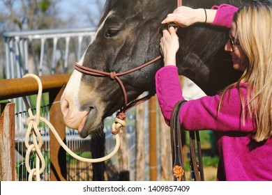 Funny horse happy on sunny day close up, woman putting on rope halter.