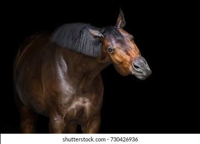 Funny horse portrait on black background