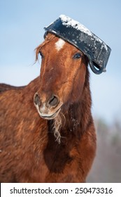 Funny horse with rubber feeding bucket on its head