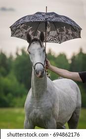 Funny horse under umbrella