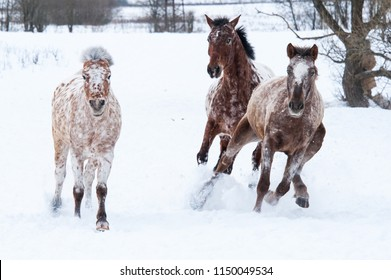 Funny horses runnning in the snow