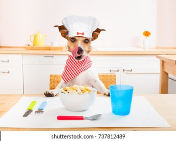funny hungry jack russell dog  in kitchen cooking or eating on table with  white chef hat
