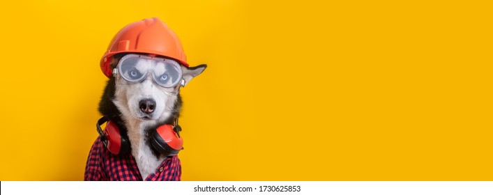 Funny husky dog worker in builder glasses, helmet and headphone to ear protection banner