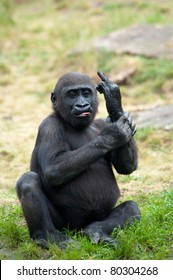 Funny image of a young gorilla sticking up its middle finger