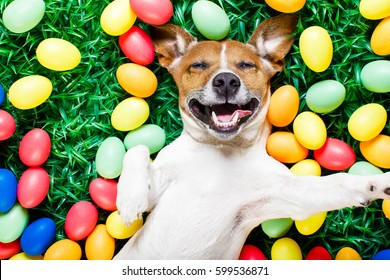 funny jack russell easter bunny  dog with eggs around on grass laughing taking a selfie with smartphone