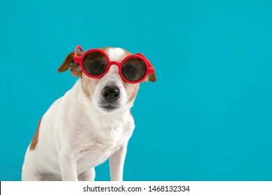Funny jack russell terrier dog in red sunglasses on a blue background
