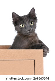 Funny kitten with big eyes in a cardboard box