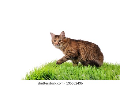 Funny kitten cat on green grass