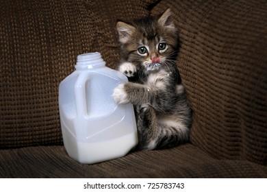 Funny Kitten Drinking Milk From a Carton Dripping