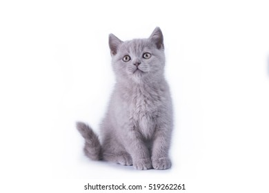 funny kitten on a background isolated