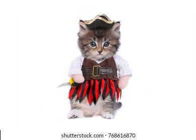 Funny Kitten in Pirate Inspired Clothing Costume