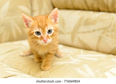 funny kitten playing
