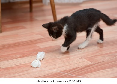 funny kitten playing with toy mouse. collecting dust from the floor with his coat.